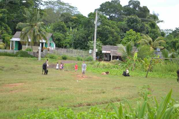 This is the view from the back of our homestay house. The kids are walking back from buying a few bananas (katakata). The field they are walking through serves as a floodplain/grazing area/soccer field.